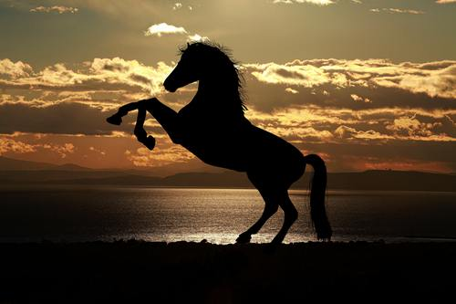 Stallion Horse in Silhouette Photography