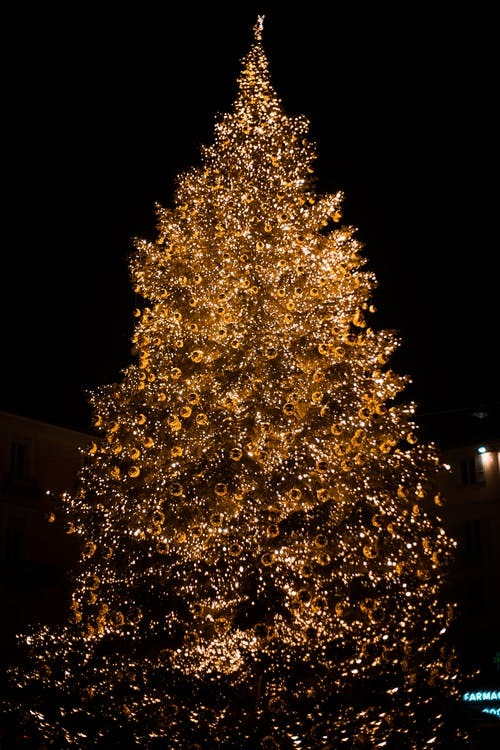 Photo of Lighted Christmas Tree at Night