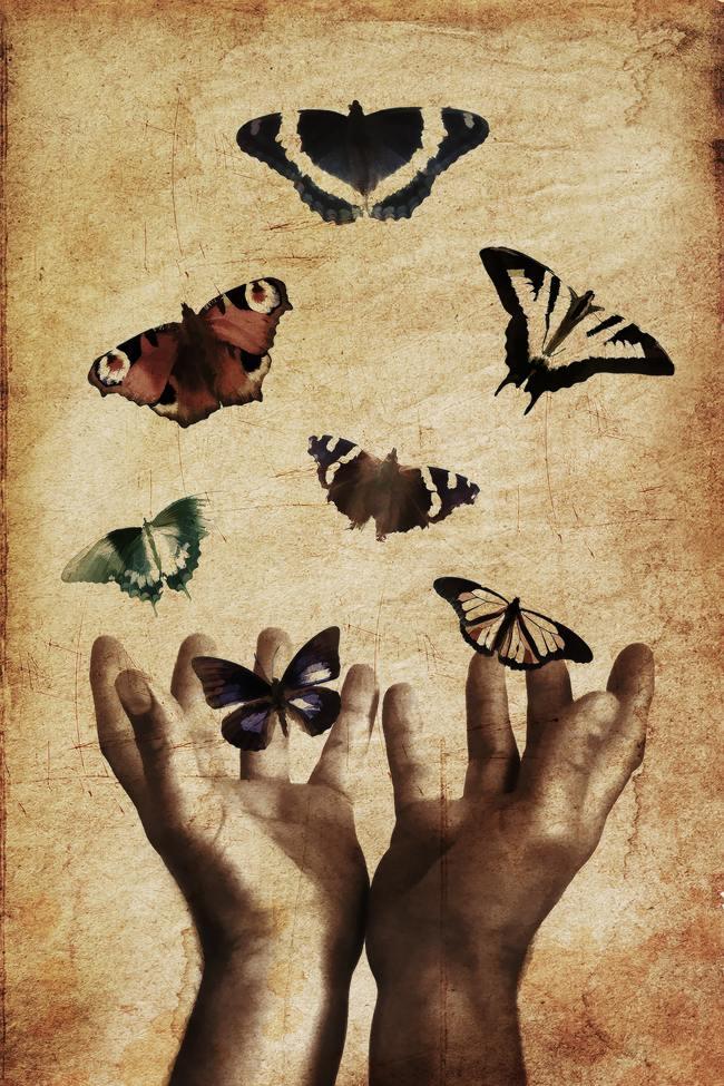 Seven Butterflies Illustration