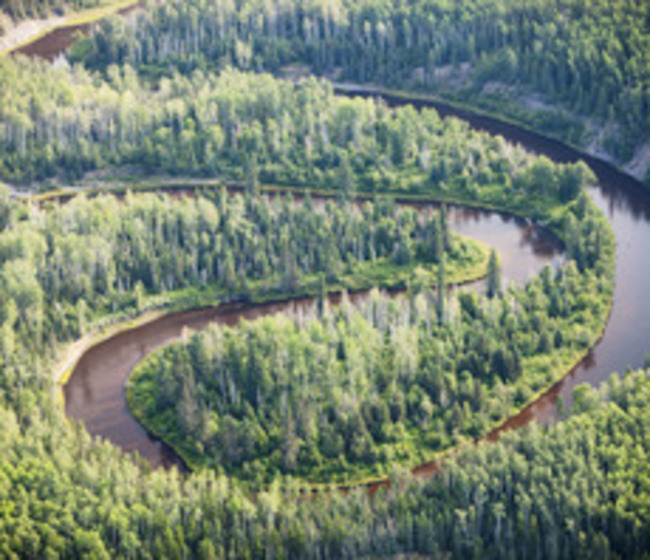 'Enormous potential': Study explores key drivers of successful reforestation schemes