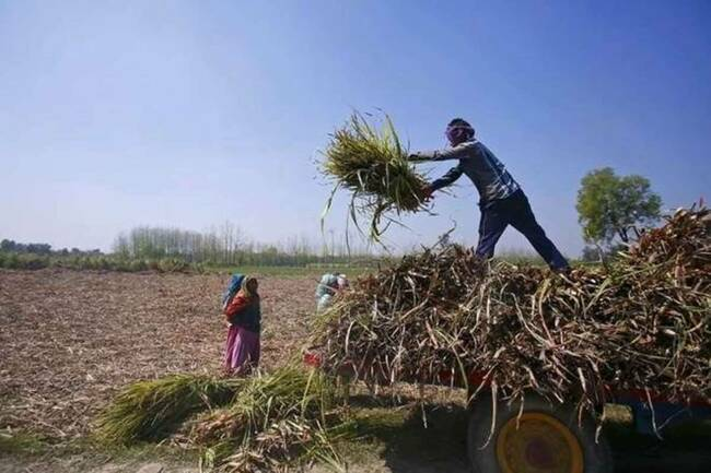 PM Kisan: Rs 19,000 crore to reach farmers' accounts on Friday