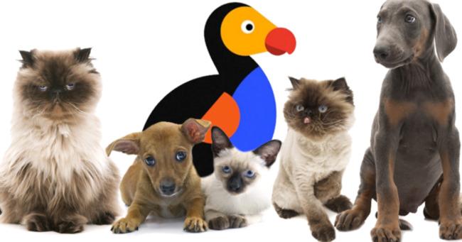 Pandemic Pet Boom Drives Group Nine Media's Ad Comeback
