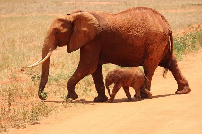 1 Elephant Beside on Baby Elephant