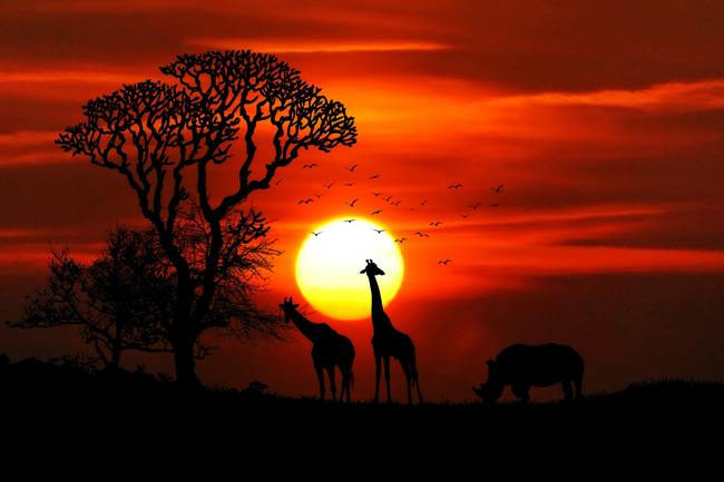 Silhouette Photography of Two Giraffe and Rhinoceros during Golden Hour