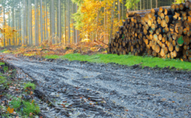 Does your business need natural capital accounts?