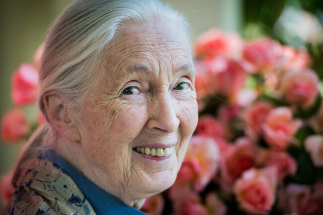 LA Natural History Museum to host West Coast debut of Dr. Jane Goodall immersive exhibition