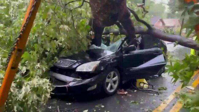 Atlanta driver survives large oak crushing car