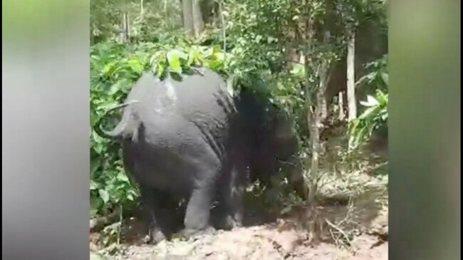 Must See! Baby Elephant Saved by Fully Grown Elephant After Falling Into a Well