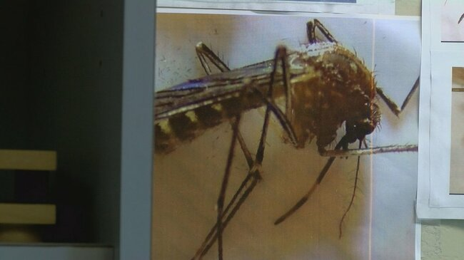 Mosquito populations could sharply rise after heavy monsoon rains