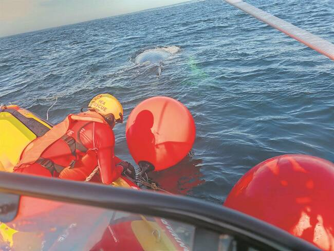 Whale rescued after becoming tangled, trapped in Port of Port Elizabeth