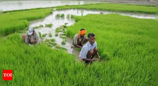 Digital Farming: Database of 8 crores land-owning farmers to be ready by December