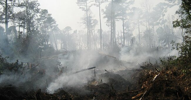 Despite potentially unprecedented drought, deep-layer 'zombie fires' are not a concern