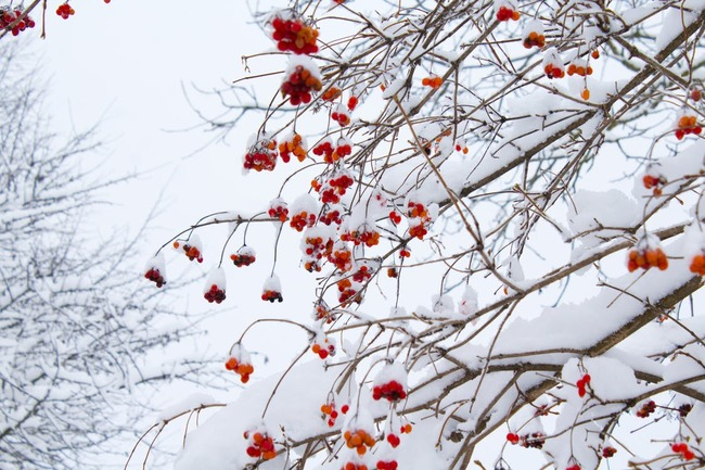 Low Angle Shot of Leafless Tree With Orange Flowers