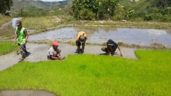 Organic agriculture in PH: No funding, no plans