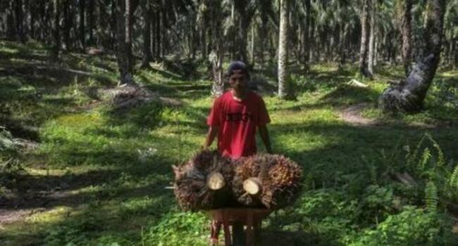 BlackRock ESG Hypocrisy Exposed: Firm Backs Palm Oil Producer With History Of Abuses
